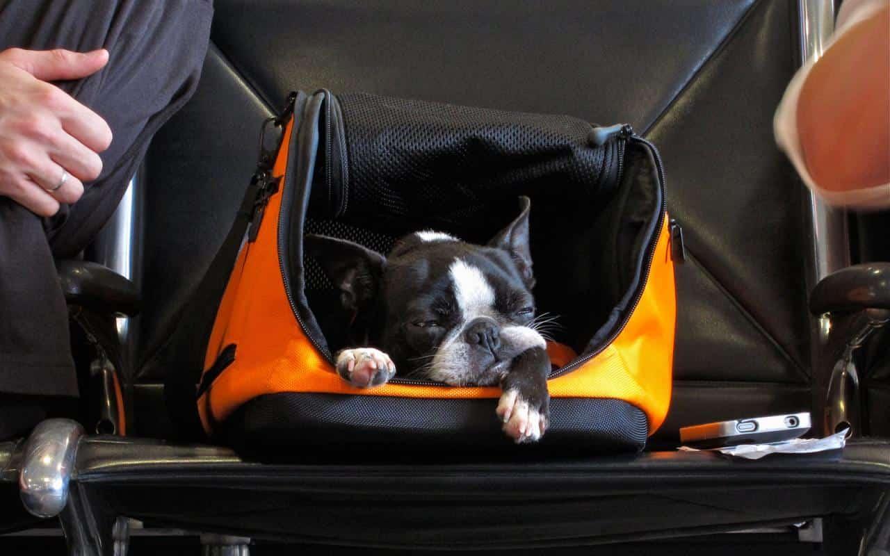 Пътуване с домашни животни, Пътуване с домашни животни в самолет
