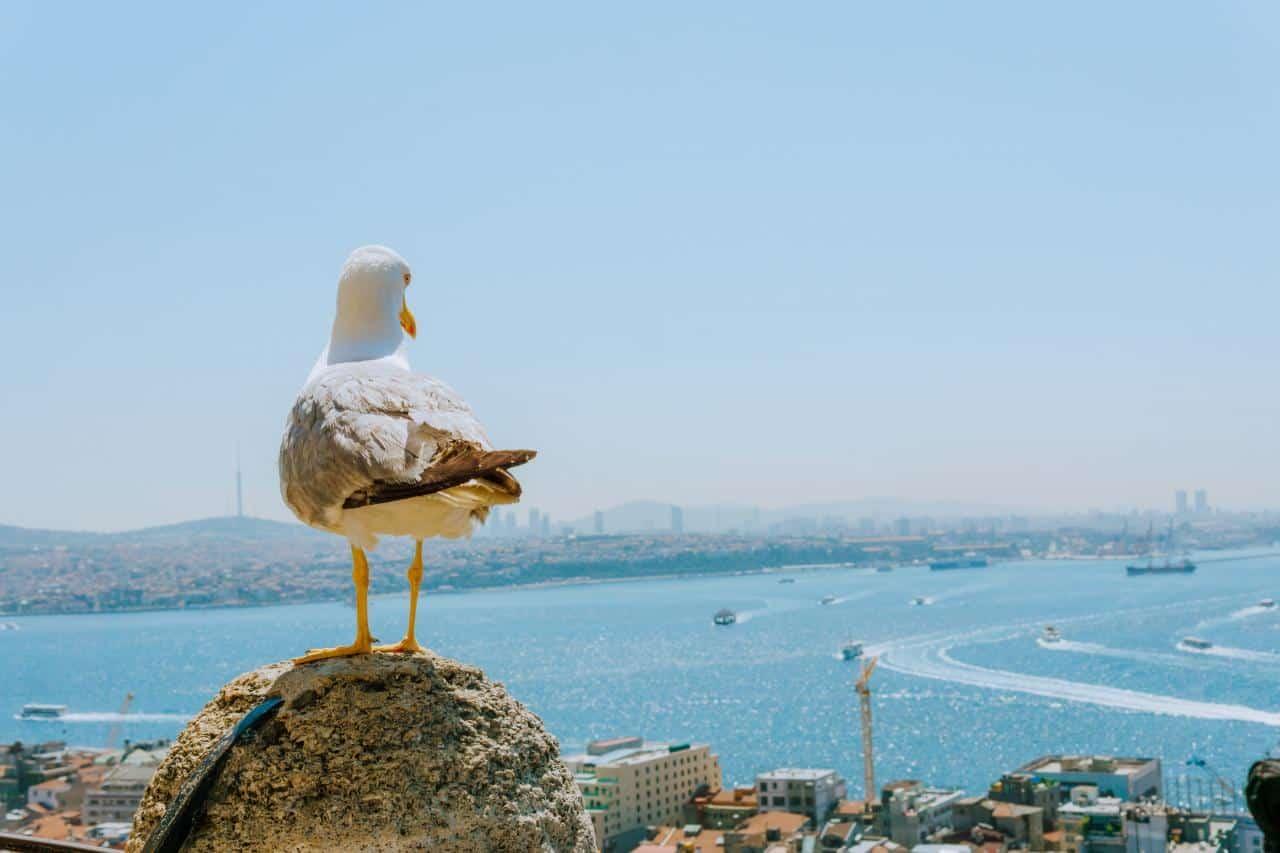 Самолетни билети до Истанбул